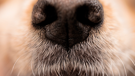 Sniffer-Thumb